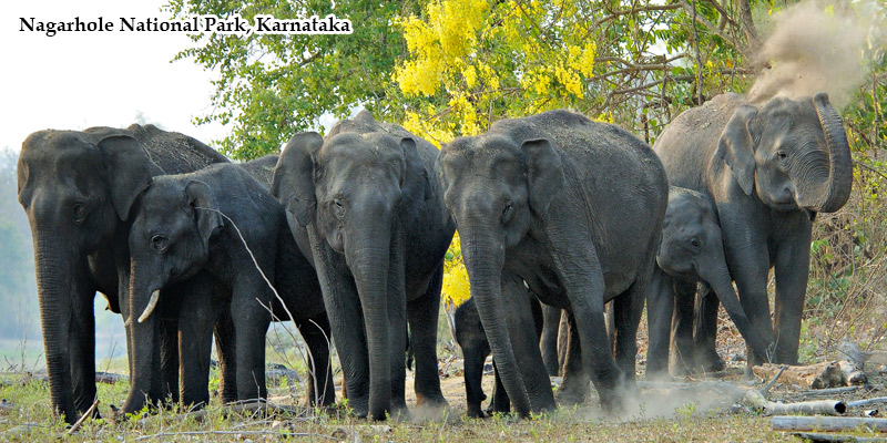 The Tusker Trail