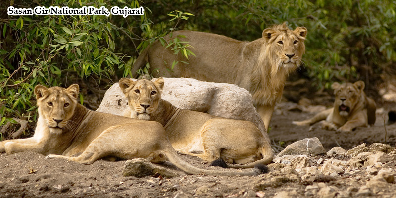 Best of Gujrat with Wildlife