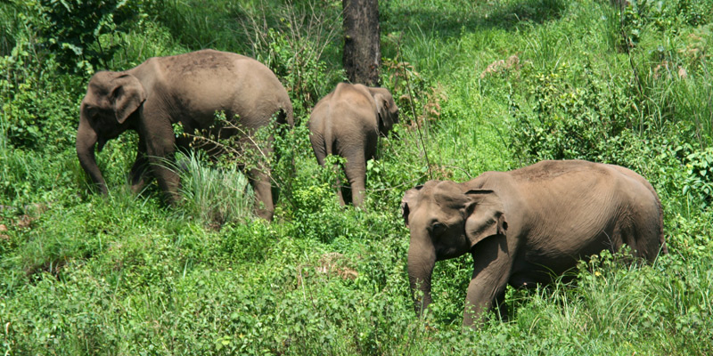 South India Wildlife Holidays