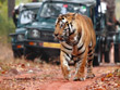 Central India Tiger Tour | Central India Wildlife Tours