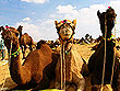 Rajasthan Wildlife Safari | Rajasthan City Tour | Rajasthan Tourism | Rajasthan Tourist Attractions | Tourist Places in Rajasthan, India