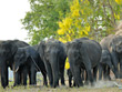 The Tusker Trail Tour | Special Tours to South India