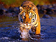 Central India Tiger Tour | Central India Wildlife Tourism | Wildlife Holidays in Central India