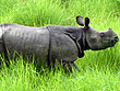 Central India Wildlife Tour | Wildlife of South India | Wildlife Tourism in South India