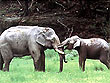 South India Wildlife Holidays | Wildlife of South India | Wildlife Tours in South India