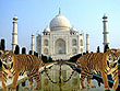 Taj Mahal and Tiger Tour