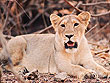 Wildlife and Heritage of Gujarat | Gujarat Wildlife Tours