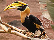 Hornbill Kumarakom Bird Sanctuary